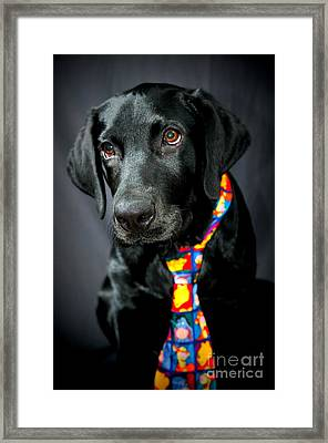 Black Lab Portrait Framed Print by Catherine Reusch Daley