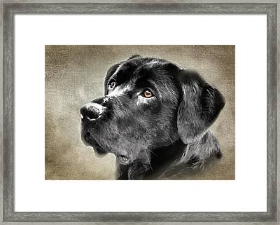 Black Lab Portrait Framed Print