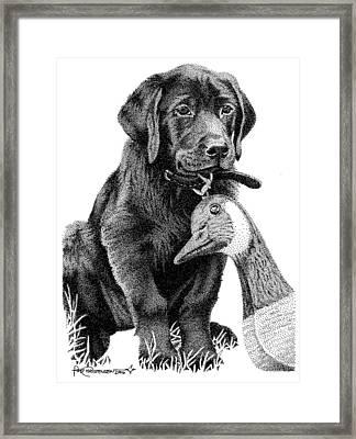 Black Lab Puppy Framed Print by Rob Christensen