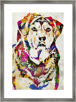 Black Lab Watercolor Art Framed Print by Christina Rollo