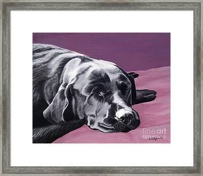Black Labrador Beauty Sleep Framed Print