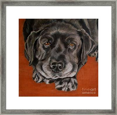 Black Labrador Rests Head Rescue Dog Framed Print