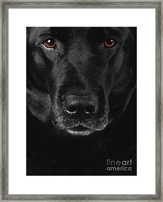 Black Labrador Retriever Framed Print