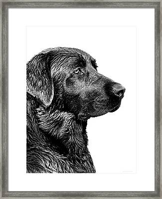 Black Labrador Retriever Dog Monochrome Framed Print