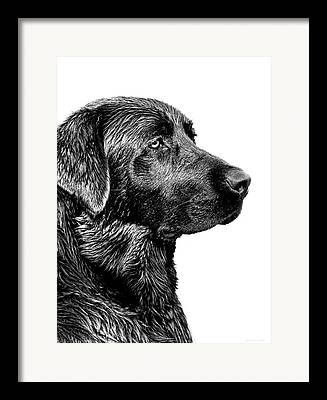 Sporting Dogs Framed Prints
