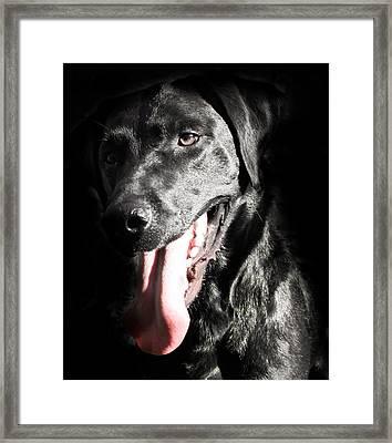 Black Labrador Retriever Framed Print by Paulina Szajek