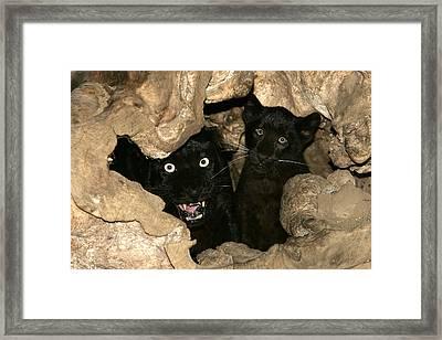 Black Leopards Framed Print by M. Watson
