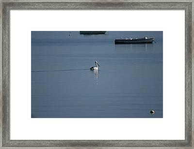 Black Line Pelican  Calm Water Framed Print