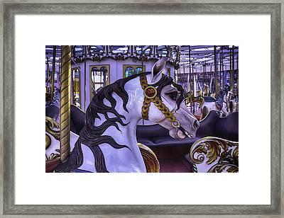 Black Mane Carrsoul Horse Framed Print by Garry Gay