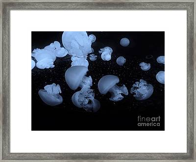 Framed Print featuring the photograph Black N Blue Jellies by Brigitte Emme