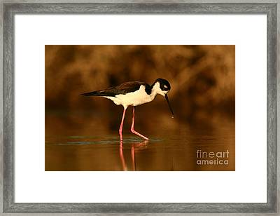 Framed Print featuring the photograph Black-necked Stilt Waterdrops by John F Tsumas