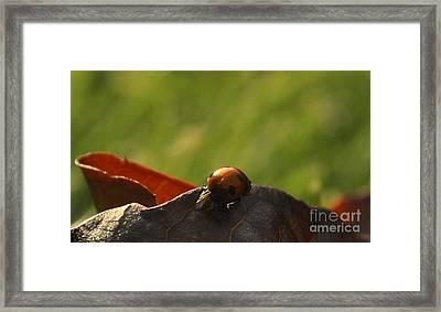 Black On Red Framed Print