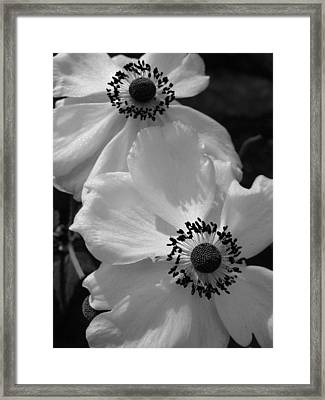 Black On White Framed Print by Cheryl Hoyle