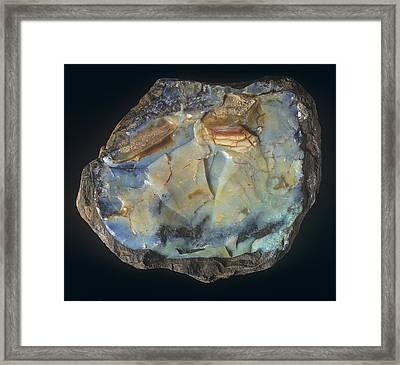 'black' Opal Cabochon Specimen Framed Print