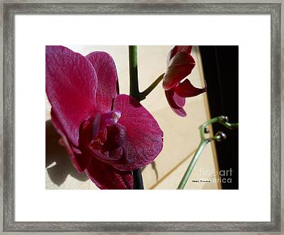 Framed Print featuring the photograph Black Orchid by Ramona Matei