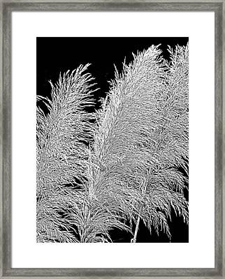 Framed Print featuring the photograph Black Pampas by Suzy Piatt