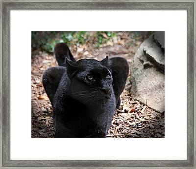 Black Panther Framed Print
