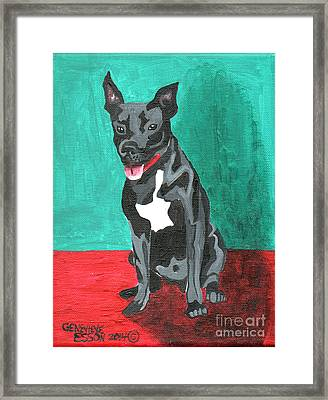 Black Pit Bull Terrier Framed Print