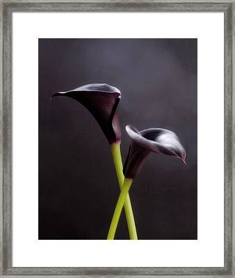 Black And White Purple Flowers Art Work Photography Framed Print by Artecco Fine Art Photography