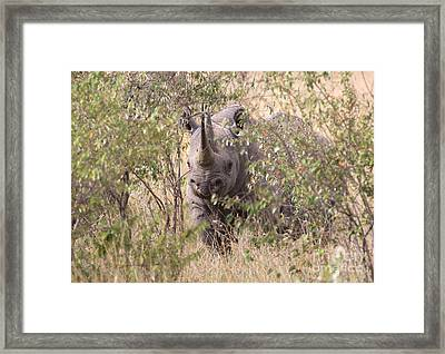 Black Rhino  Framed Print by Chris Scroggins