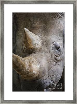 Black Rhinoceros Framed Print by  Andrew Forsyth FLPA