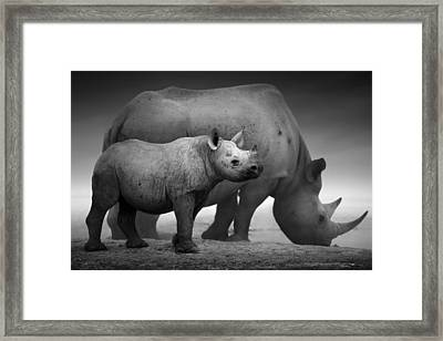 Black Rhinoceros Baby And Cow Framed Print by Johan Swanepoel