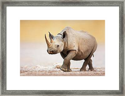Black Rhinoceros Framed Print by Johan Swanepoel