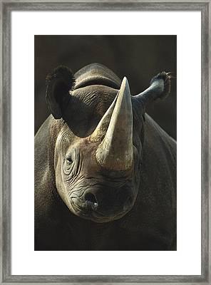 Black Rhinoceros Portrait Framed Print