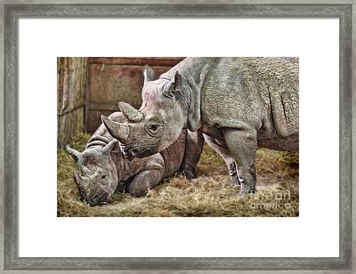 Black Rhinos 1 Framed Print by Ed Churchill