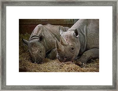 Black Rhinos 2 Framed Print by Ed Churchill