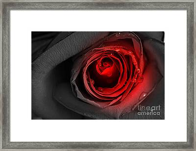 Black Rose Framed Print