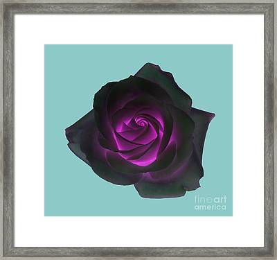 Black Rose With Purple Centre On Pale Turquoise Background. Framed Print by Rosemary Calvert