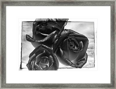 Black Roses Framed Print
