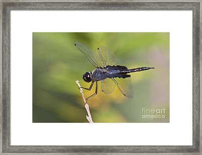 Framed Print featuring the photograph Black Saddlebags by Bryan Keil