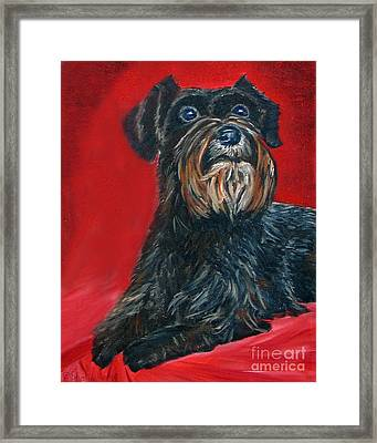 Black Schnauzer Pet Portrait Prints Framed Print