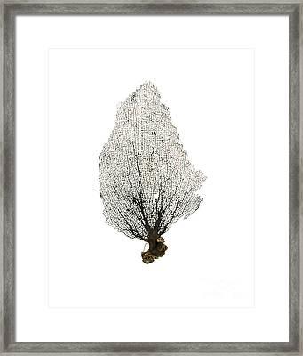 Black Sea Fan No.1 Framed Print by Jennifer Booher
