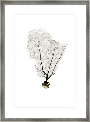 Black Sea Fan No.2 Framed Print by Jennifer Booher