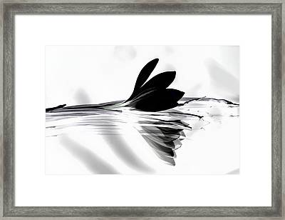 Black Silk Crocus Framed Print