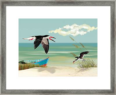 Black Skimmers Fishing Framed Print by Anne Beverley-Stamps