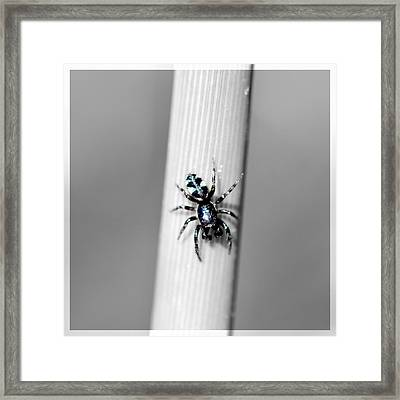Black Spider In Black And White Framed Print by Tommytechno Sweden