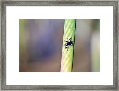 Black Spider In Reeds Framed Print by Tommytechno Sweden