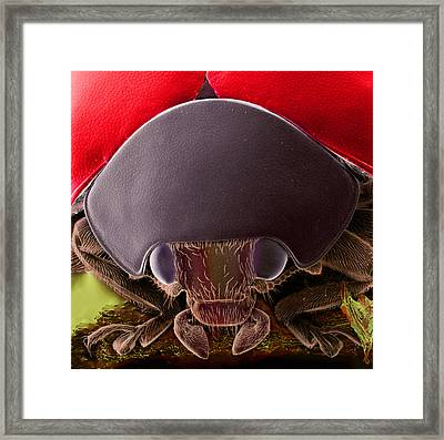Black Spotted Ladybird Framed Print