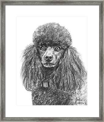 Black Standard Poodle Sketched In Charcoal Framed Print