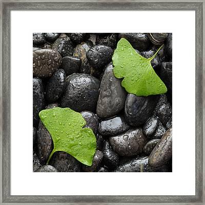 Black Stones And Ginko Leaves Square Framed Print
