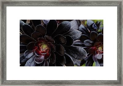 Black Succulent Framed Print