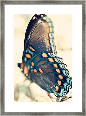 Black Swallowtail Butterfly Framed Print by Kim Fearheiley