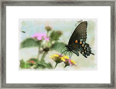 Black Swallowtail Framed Print by Lorri Crossno