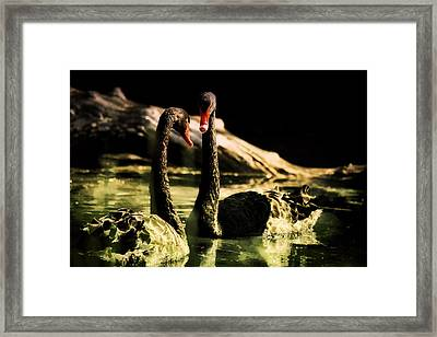 Black Swan Framed Print by Diane Dugas