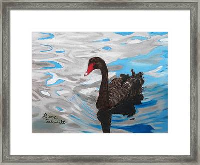 Black Swan Swimming Lake Eola Framed Print
