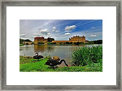 Black Swans At Leeds Castle II Framed Print